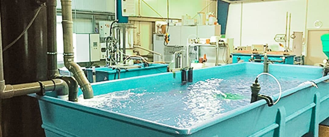 Aquaculture Recirculation Systems