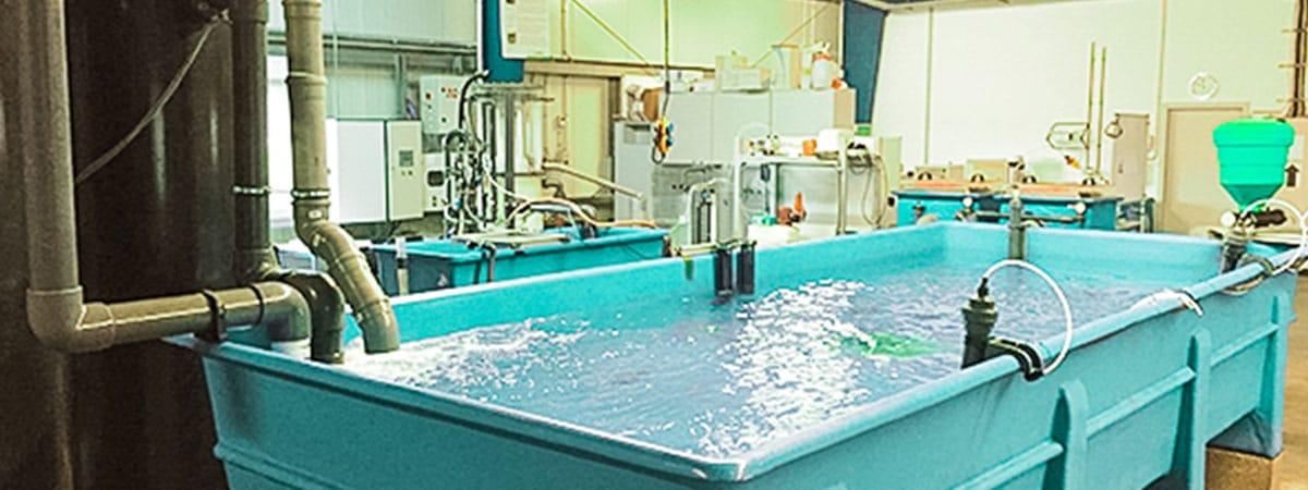 Aquakultur Geschlossene Kreislaufanlagen