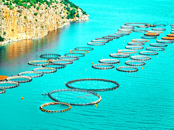 Aquakultur 3 | Offene Systeme