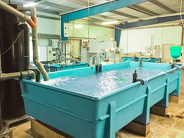 Aquakultur 4 | Kreislaufanlagen