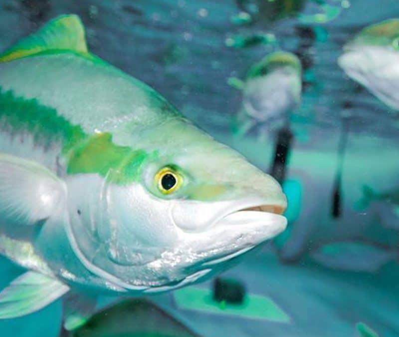 Fische bald frisch vom Bauernhof?