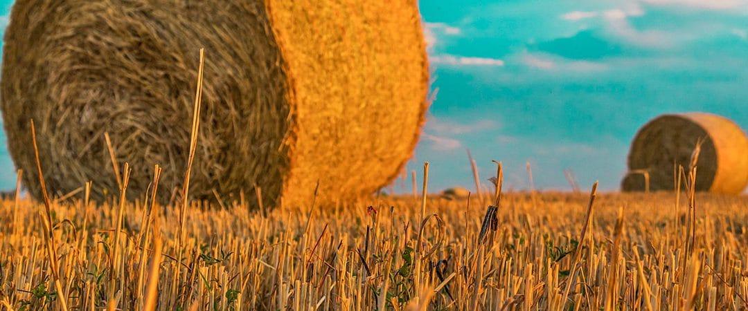 Die Entwicklung der Landwirtschaft