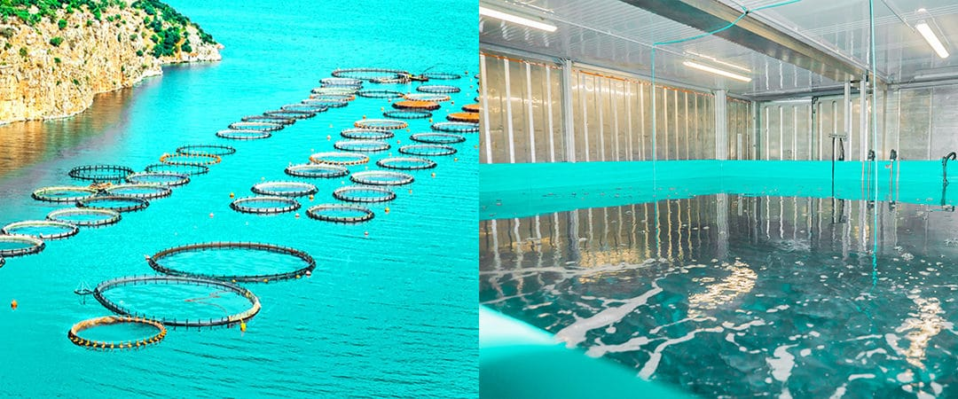 Fish farming on land versus fish farming in the sea