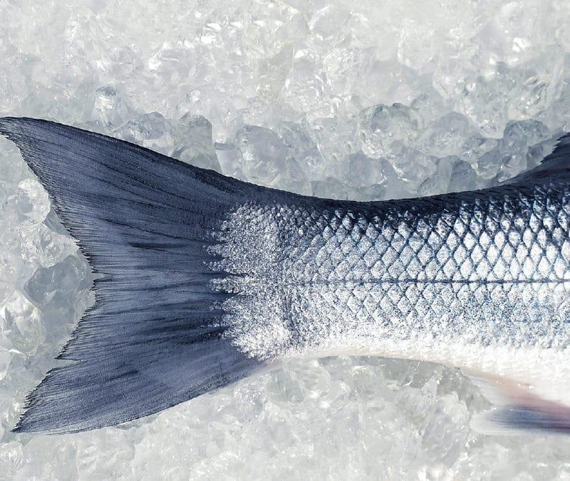 Frischer Meeresfisch aus der Region