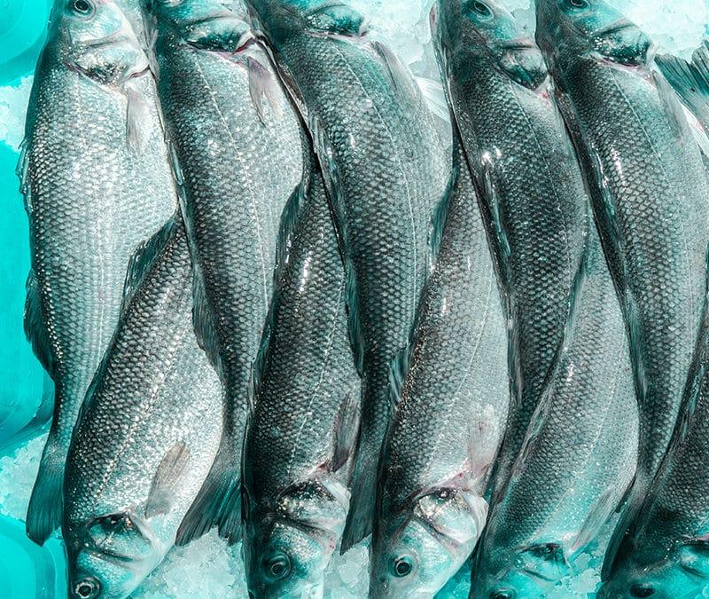 Nachhaltige Fischzucht aus dem Saarland