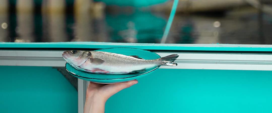 Regionaler Meeresfisch – aus dem Becken auf denTisch