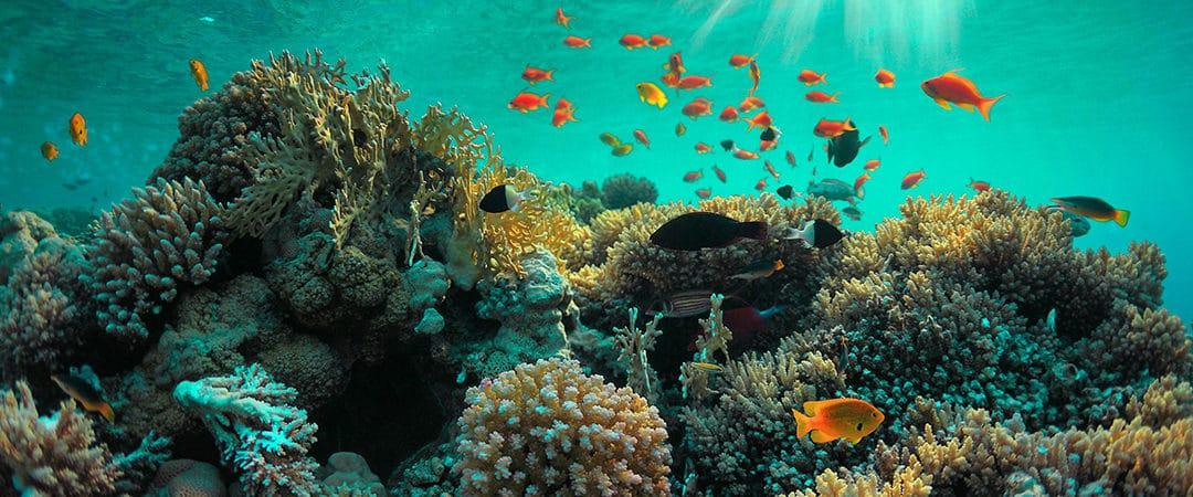Sicherung biologischer Meeresvielfalt durch innovative Aquakultur